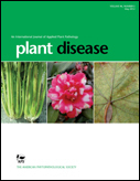 Sweetpotato Viruses: 15 Years of Progress on Understanding and Managing Complex Diseases | Africa and Beyond | Scoop.it