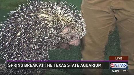 Texas State Aquarium Extended Hours For Spring Break | Texas Coast Real Estate | Scoop.it