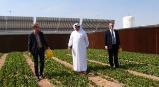 Le Qatar n'aura bientôt plus besoin d'importer le moindre légume! | Innovation dans l'Immobilier, le BTP, la Ville, le Cadre de vie, l'Environnement... | Scoop.it
