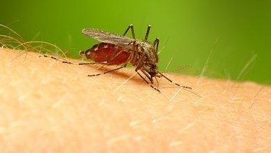 Comment se débarrasser des moustiques ? | T6 - Environnement, style de vie, animaux | Scoop.it