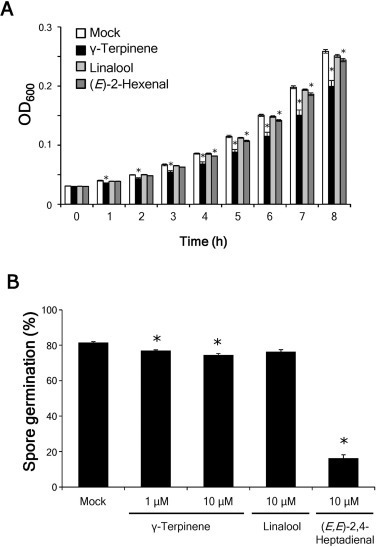 Rice terpene synthase 24 (OsTPS24) encodes a jasmonate-responsive monoterpene synthase that produces an antibacterial γ-terpinene against rice pathogen | Rice Blast | Scoop.it