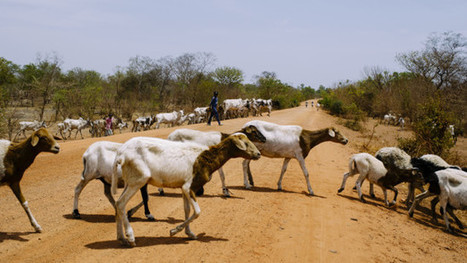 Why farms of the future need to mix livestock and crops | Devex | CGIAR Climate in the News | Scoop.it