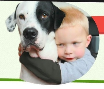 Fundraising for Animal Shelters, Rescues & Pet Expenses - PetCaring.com | For Pet Lovers | Scoop.it