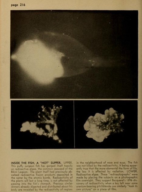 The X-Ray Images That Showed Midcentury Scientists How Radiation Affects an Ecosystem | Fragments of Science | Scoop.it
