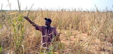 Spéculation sur les denrées agricoles : les banques recidivent | Changer... ou pas! | Scoop.it