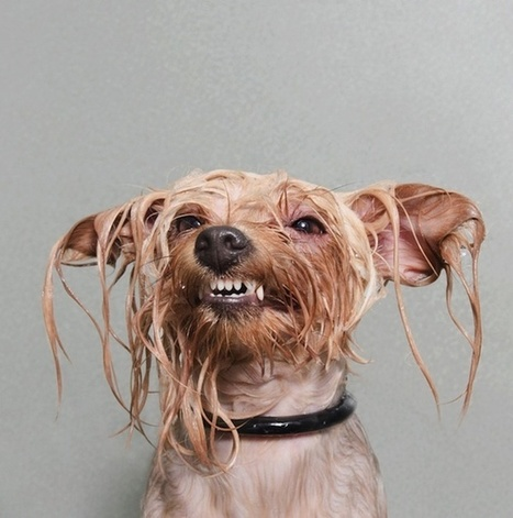 Portraits of Wet Dogs Taken Mid-Bath | Pet Humor | Scoop.it