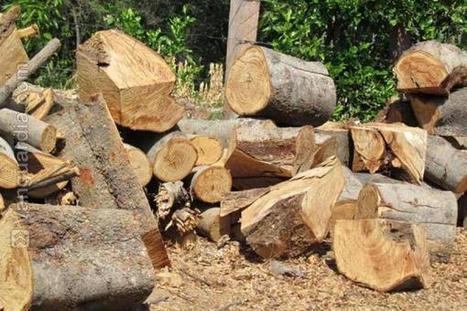 Identifican otros ocho núcleos de deforestación en Colombia - Vanguardia Liberal - Compartido por DIEZMA.   Sector Parquet   Scoop.it