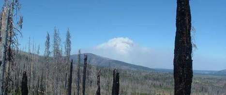 Insect-killed forests pose no additional likelihood of wildfire | GarryRogers NatCon News | Scoop.it