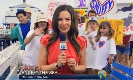 Best Shark Week Commercial EVER | Bizarre & Weird | Scoop.it