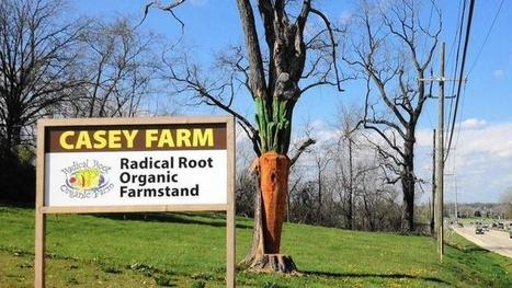 Dead tree transformed into roadside beacon for organic farm | sustainablity | Scoop.it