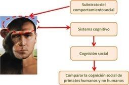 Reciclando el cerebro mediante valores | RRHH y Más | Scoop.it