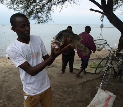 Las amenazas sobre el lago Victoria - Udare | Safaris | Scoop.it