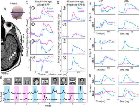 New Technique Allows Scientists to Read Minds at Nearly the Speed of Thought #neuroscience | Limitless learning Universe | Scoop.it