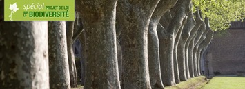 Loi biodiversité : les sénateurs renforcent la protection des alignements d'arbres | Bois, forêt, construction, bois énergie, ameublement et plus | Scoop.it