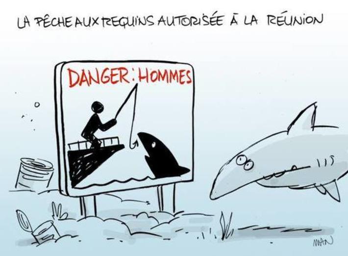 La pêche aux requins autorisée à la Réunion | Baie d'humour | Scoop.it