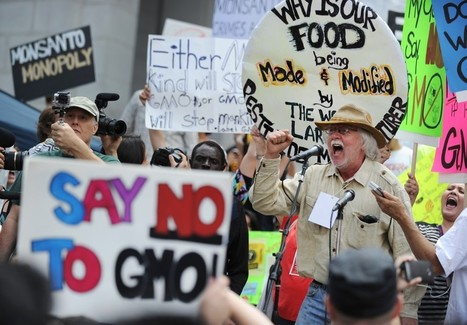 Unapproved genetically modified wheat from Monsanto found in Oregon field   CIPLC AP Human Geography   Scoop.it