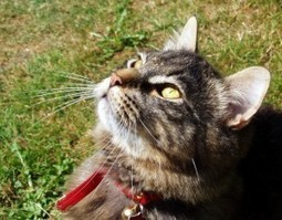 What does holistic cat care mean to you? | The Conscious Cat | Pet News | Scoop.it