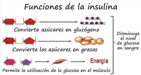Los hidratos de carbono: índice glucémico (II). | Colesterol e índice glucémico | Scoop.it