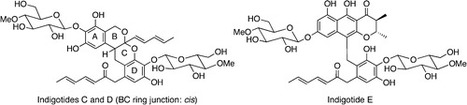 Aromatic Polyketide Production in Cordyceps indigotica, an Entomopathogenic Fungus, Induced by Exposure to a Histone Deacetylase Inhibitor | natural product | Scoop.it