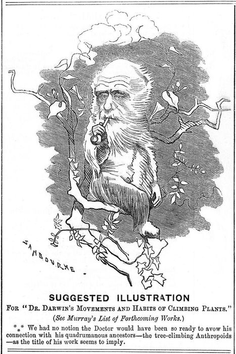 Darwin, retour aux origines | PLASTICITIES  «Between matter and form, between experience and consciousness, the active plasticity of the world » | Scoop.it