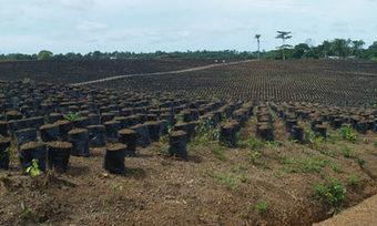 Sierra Leone's smallholder farmers 'worse off' after large land deals | Daraja.net | Scoop.it