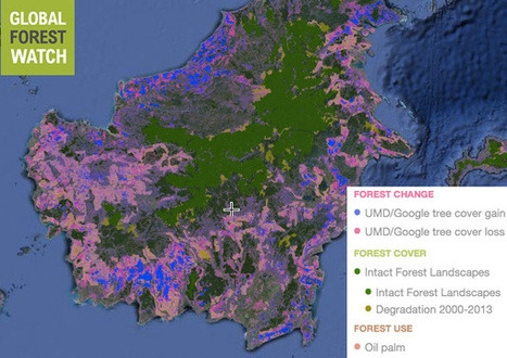 Central Kalimantan to set up palm oil monitoring system to in bid cut deforestation 80% | Forests | Scoop.it