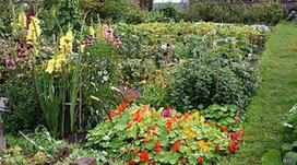 NATURA - MEDIO AMBIENTAL ©: Investigaciones sugieren que las plantas se comunican a través del sonido | MISIONARTE CULTURA UNIVERSAL | Scoop.it