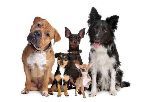 Le chien est le meilleur ami de l'homme grâce à son regard   CaniCatNews-actualité   Scoop.it