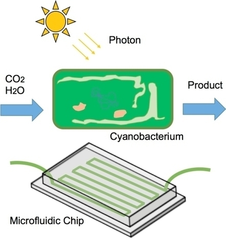 Review of Microfluidic Photobioreactor Technology for Metabolic Engineering and Synthetic Biology of Cyanobacteria and Microalgae | SynBioFromLeukipposInstitute | Scoop.it