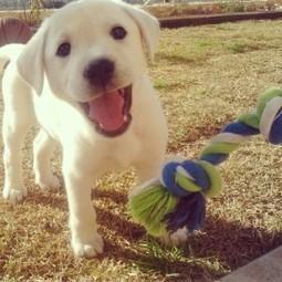 About my dog - Female Dog Names | female dog names | Scoop.it