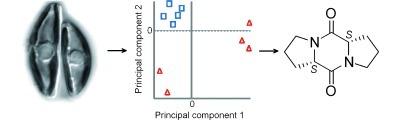 Metabolomics Enables the Structure Elucidation of a Diatom Sex Pheromone | BiotoposChemEng | Scoop.it