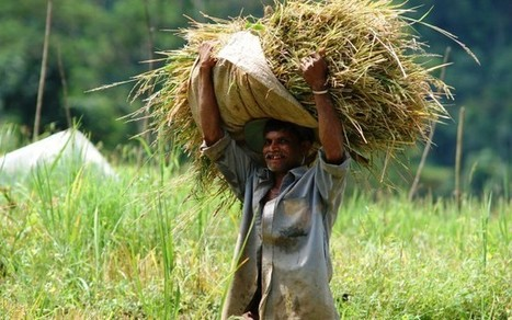 Occupational safety and health of farmers in Sri Lanka » The Nation | Occupational and Environment Health | Scoop.it
