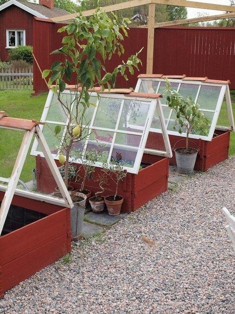 Greenhouses from Repurposed Windows | Gardening | Scoop.it