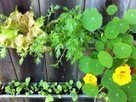 The Easiest Urban Garden? Gardenista | Sustainibility | Scoop.it