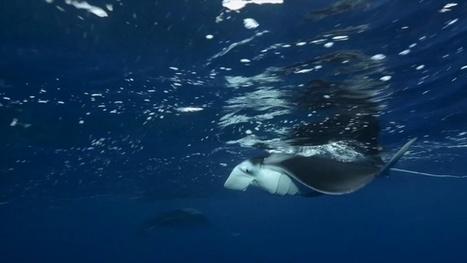 Vidéo Full HD | Comores - Mohéli, l'Éden de la plongée ! | Plongeurs.TV | Scoop.it