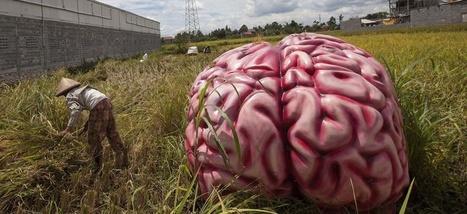 Dix choses que j'ai apprises sur moi-même grâce à la neuroscience ...   Neuroscience   Scoop.it