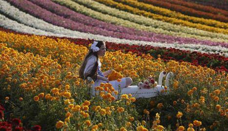 Las flores llegan a la mesa - Diario de Mallorca | El cultivo de gladiolos | Scoop.it