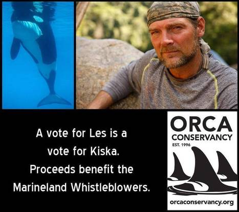 A Vote For Les Stroud is a Vote for Kiska The Lone Orca | Dolphins | Scoop.it
