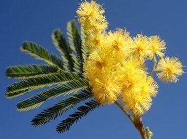 Soigner avec les huiles essentielles, l'aromath... | Naturopathie | Scoop.it