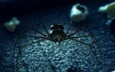 Mentos Game Lets You Punch Spider from a Recent Ad | Veille Fournisseurs | Scoop.it