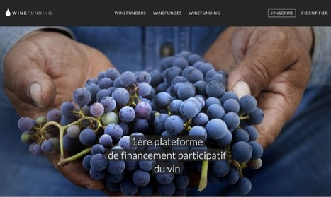 Comment WineFunding veut rendre accessible à tous l'investissement dans le vin | Le vin quotidien | Scoop.it
