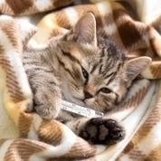 Comment détecter des troubles urinaires chez mon chat ? - Allo-Médecins | CaniCatNews-santé | Scoop.it