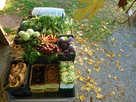 WWOOF - the good, the bad, and stories from the farm | For the love of travel | Scoop.it