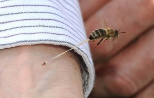 Picture of the Day: The Honeybee's Final Sting | Digital-News on Scoop.it today | Scoop.it
