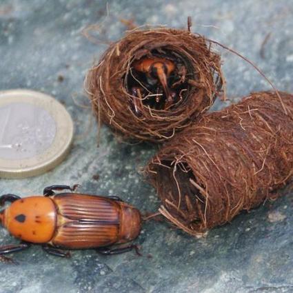 Montpellier : forte prolifération d'un insecte ravageur en Languedoc -Roussillon | Toxique, soyons vigilant ! | Scoop.it