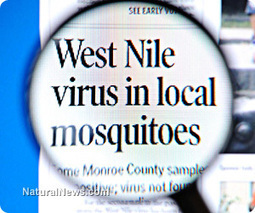 Avoid West Nile naturally with these tips and immune-boosting supplements | Telcomil Intl Products and Services on WordPress.com