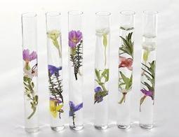 Une petite cure estivale? (Moustique.be) | Chlorella | Scoop.it