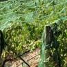 Wine Tasting Tips from Villa del Monte Winery