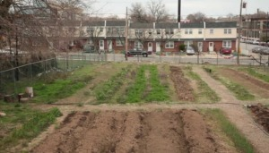 Chicken soup for the soil: Cleaning up toxic earth in Philadelphia [VIDEO] | Sustainable Futures | Scoop.it