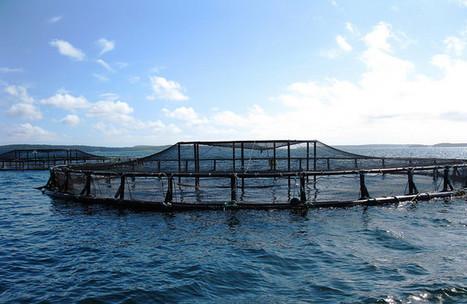 Aquaculture: Huge opportunities in  South Africa | Aquaculture | Scoop.it